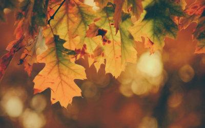Herbst2_400x250_timothy-eberly-yuiJO6bvHi4-unsplash